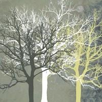 Tranquil Forest Fine Art Print