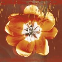 Tulip Fresco (red) Framed Print