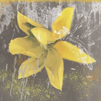 Tulip Fresco (yellow) Fine Art Print