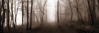 Woodland Walk (Sepia) Framed Print