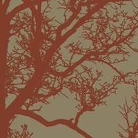 Cinnamon Tree IV Framed Print