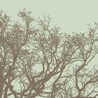 Winter Tree II Framed Print