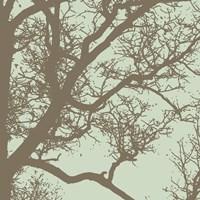 Winter Tree IV Framed Print