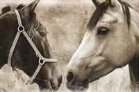 Horse Pair Framed Print