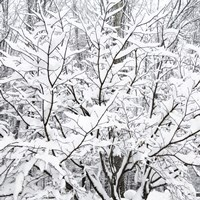 Snow Filled Branches Fine Art Print