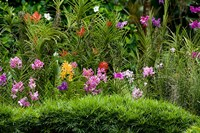 Flower Bed, National Orchid Garden, Singapore Fine Art Print