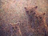 3 Bears Fine Art Print