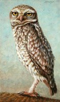 Burrowing Owl Fine Art Print