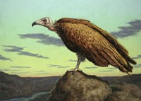 Buzzard Rock Fine Art Print