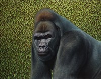 Gorilla With A Hedge Fine Art Print