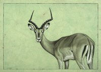 Impala Fine Art Print