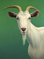 Portrait of A Goat Fine Art Print