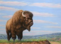 American Bison Fine Art Print