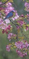 Bluebird Pink Blossoms Fine Art Print