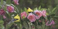 Garden Gems Fine Art Print