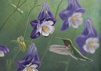 Hummingbird Purple - Columbine Fine Art Print