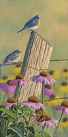 Monarchs of the Prairie - Bluebirds Fine Art Print