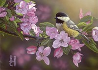 Pretty in Pink - Chickadee Fine Art Print