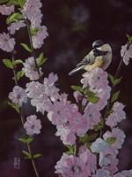 Springtime Blossoms - Chickadee Fine Art Print