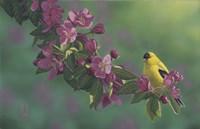 Gold Pink Fine Art Print