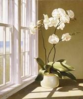 Pot Of Orchids Fine Art Print