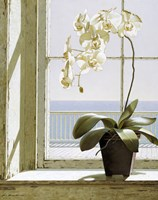 Flower In Window Fine Art Print