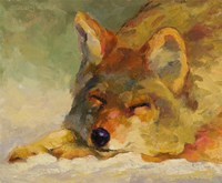 Chillin Coyote Fine Art Print