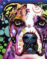 American Bulldog 1 Fine Art Print