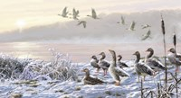 Winter River Geese Fine Art Print