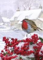 Village Robin 1 Fine Art Print