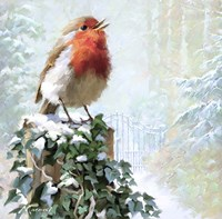 Robin On Ivy Fine Art Print