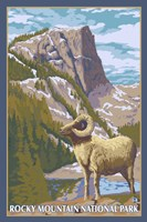 Rocky Mountain Park Ram Fine Art Print