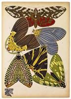Butterflies Plate 5 Framed Print