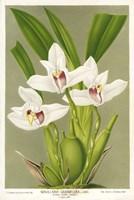 Maxillaria Orchid Fine Art Print