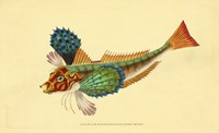 The Natural History of British Fishes - Plate 1 Fine Art Print