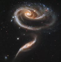 "A """"Rose"""" Made of Galaxies Highlights Hubble's 21st Anniversary Fine Art Print"