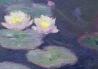 Crop Water Lilies Fine Art Print