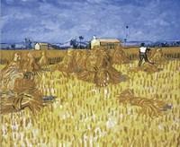 Cornfield in Provence Fine Art Print