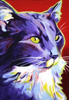 Cat Kelsier Fine Art Print