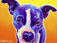 Pit Bull Sadie Fine Art Print