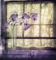Window Orchids Fine Art Print