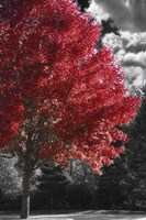 New England Autumn II Framed Print