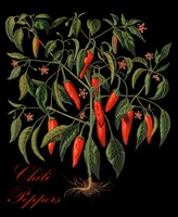 Chili Peppers Fine Art Print