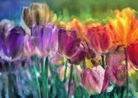 Tulip Farm Fine Art Print