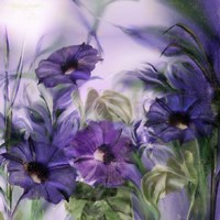 Purple Dream I Fine Art Print