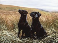 Two Black Labs Fine Art Print