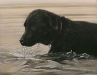 Wading Fine Art Print
