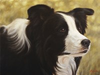 Border Collie 3 Framed Print