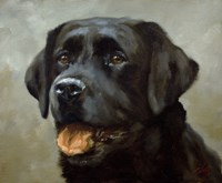 Black Lab 6 Fine Art Print