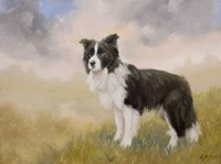 Border Collie 5 Fine Art Print